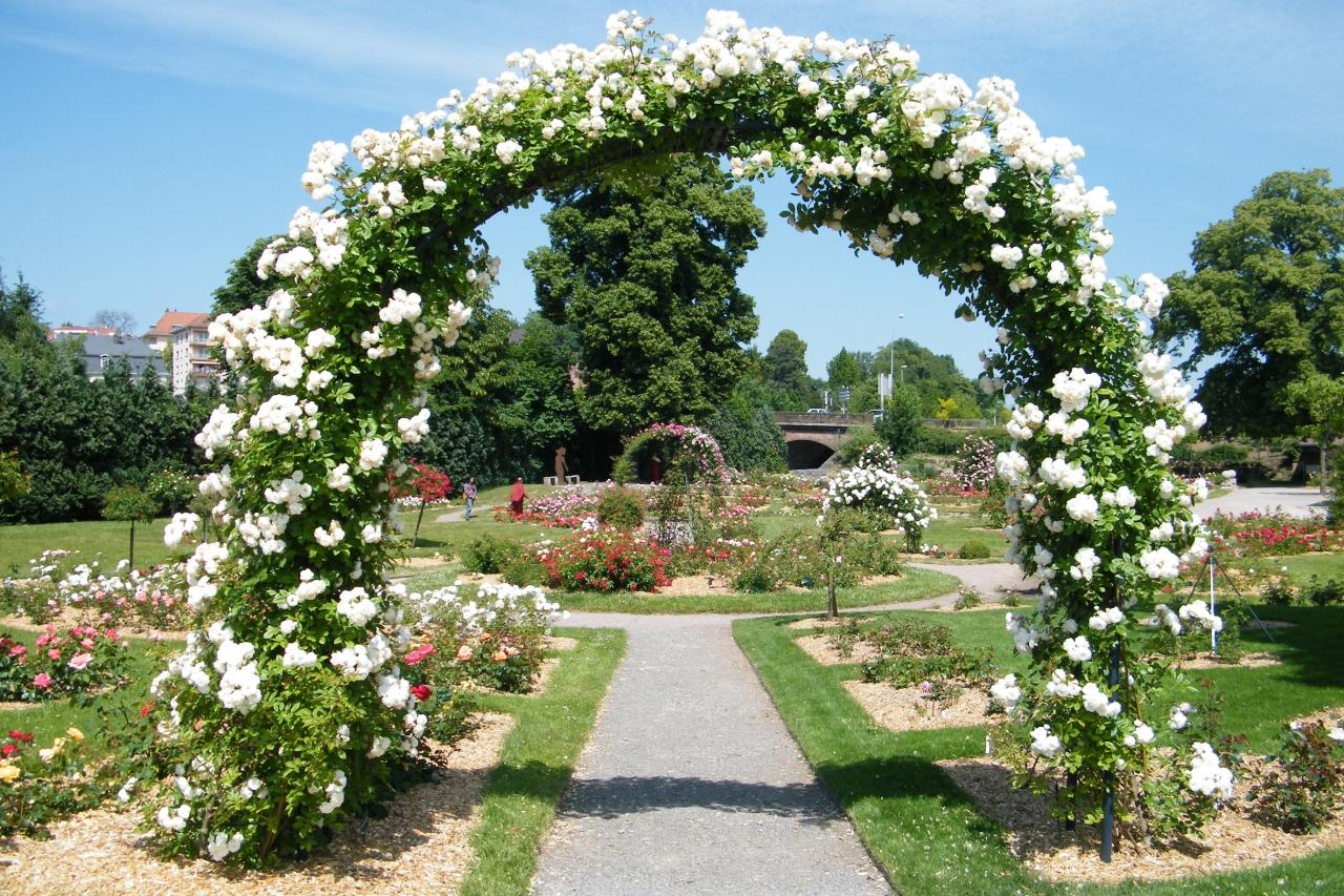 Les roseraies for Jardin roses