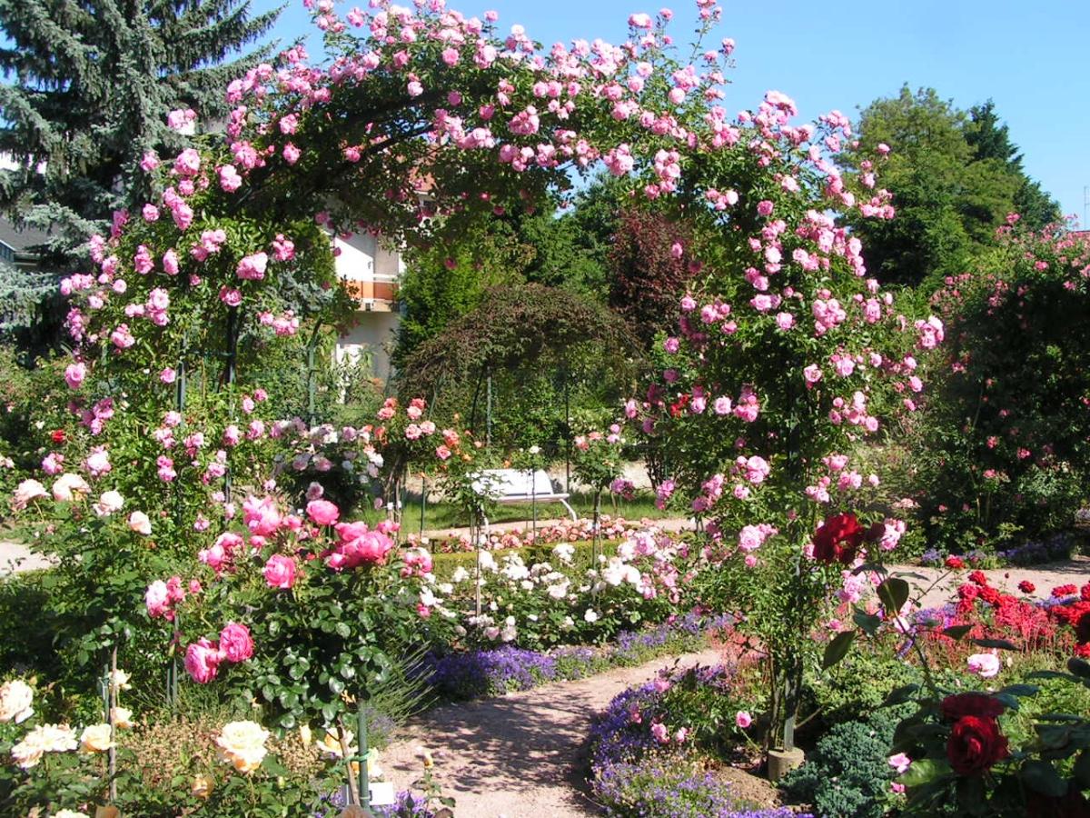 Lexique des jardins for Jardin roses