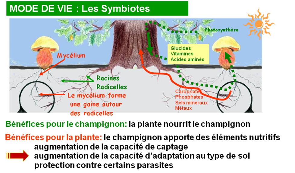 L ments de d finition - Application pour reconnaitre les champignons ...